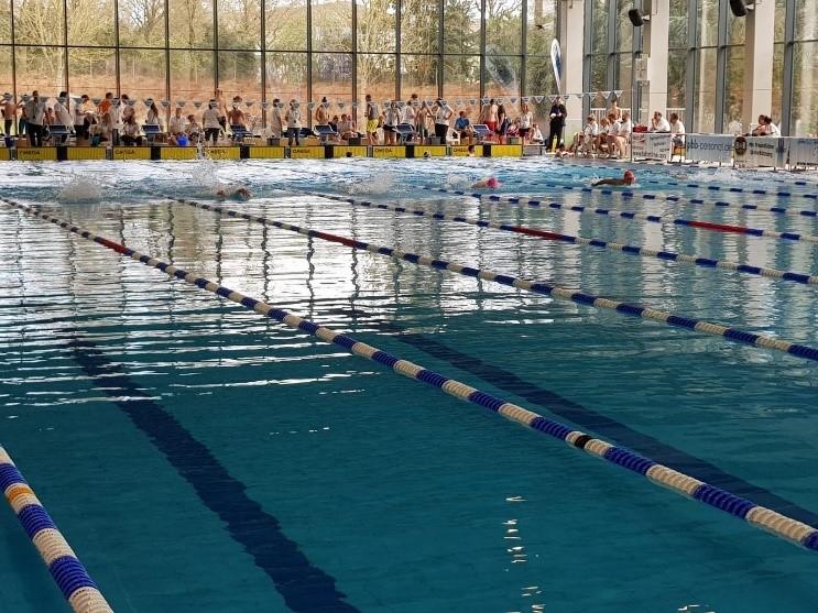 Schwimmer überzeugen im internationalen Teilnehmerfeld